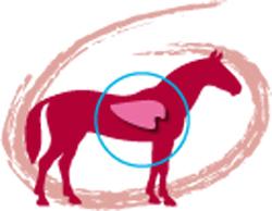 icona_Jodoresp_cavallo