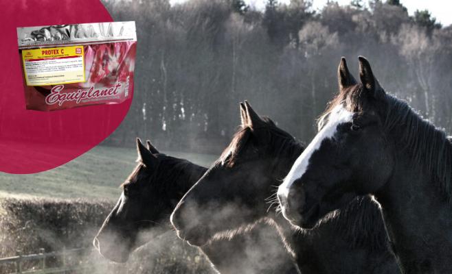 protex c gestione freddo cavallo