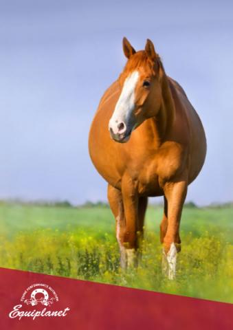 Horses breeding season