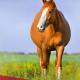 Stagione Riproduttiva Equini