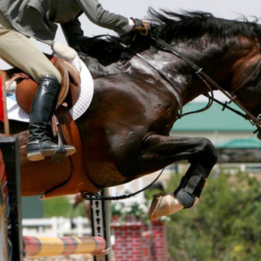 elettroliti cavallo sportivo