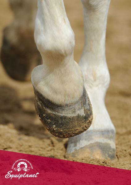 biotina per cavalli